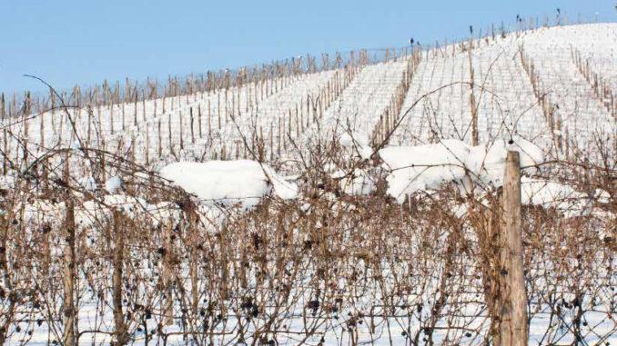 Europas minsta vinskörd på 100 år