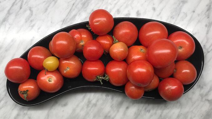 Små tomater röda -de sista i sitt slag
